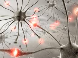 Connected nerves