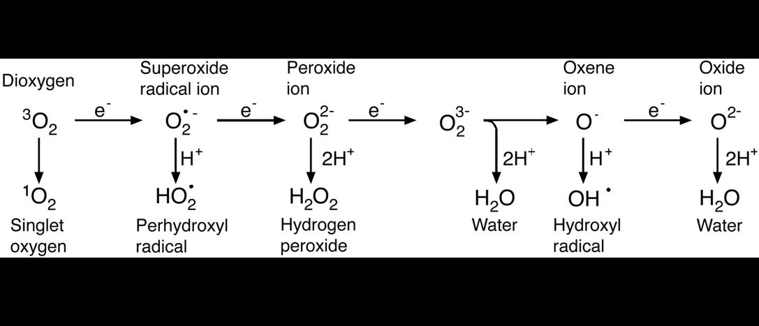 Oxyen ROS